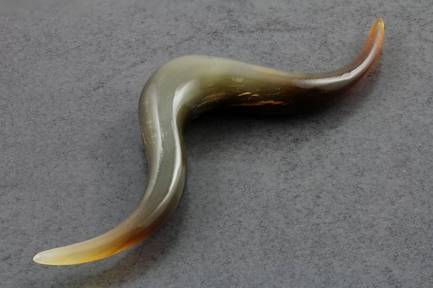 Image of Golden Horn Pointed Septum Mustache body piercing jewellery NZ